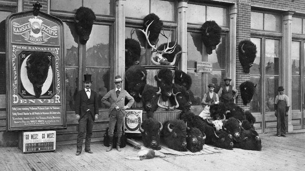 A collection of bison heads killed from the Kansas Pacific Railway.