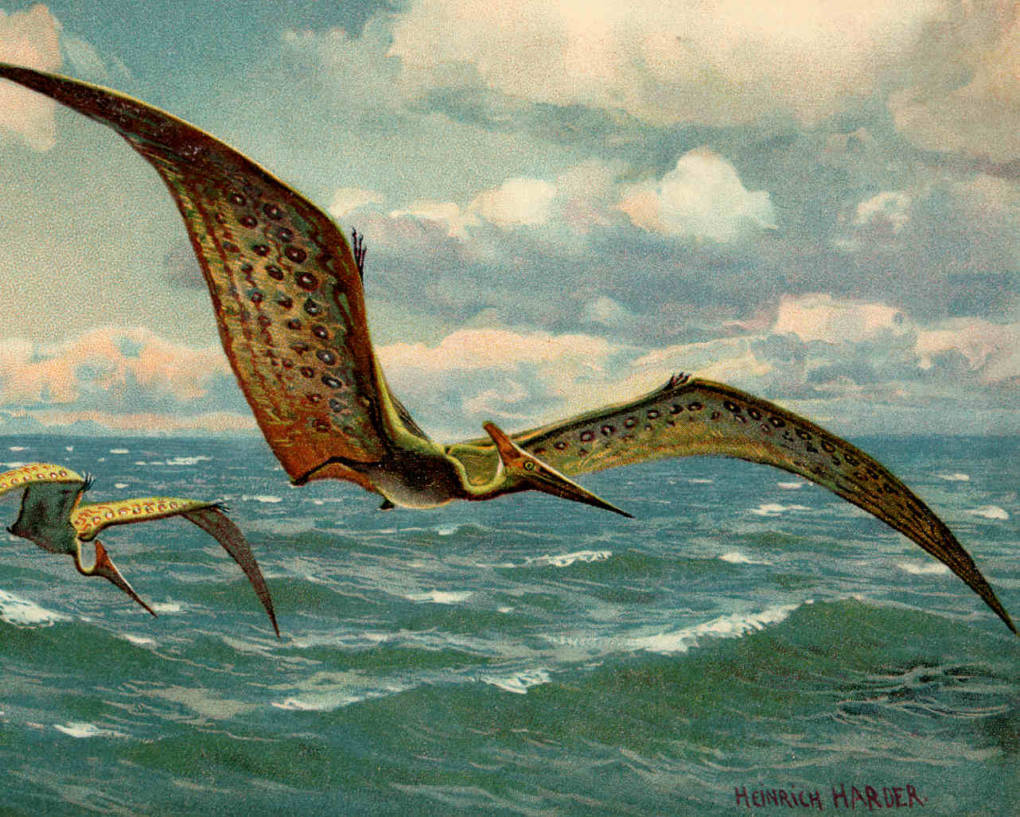 The huge wings of the pterosaurs would have given the flying reptile a large range. Scientific note: This illustration depicts an incorrect wing attachment.