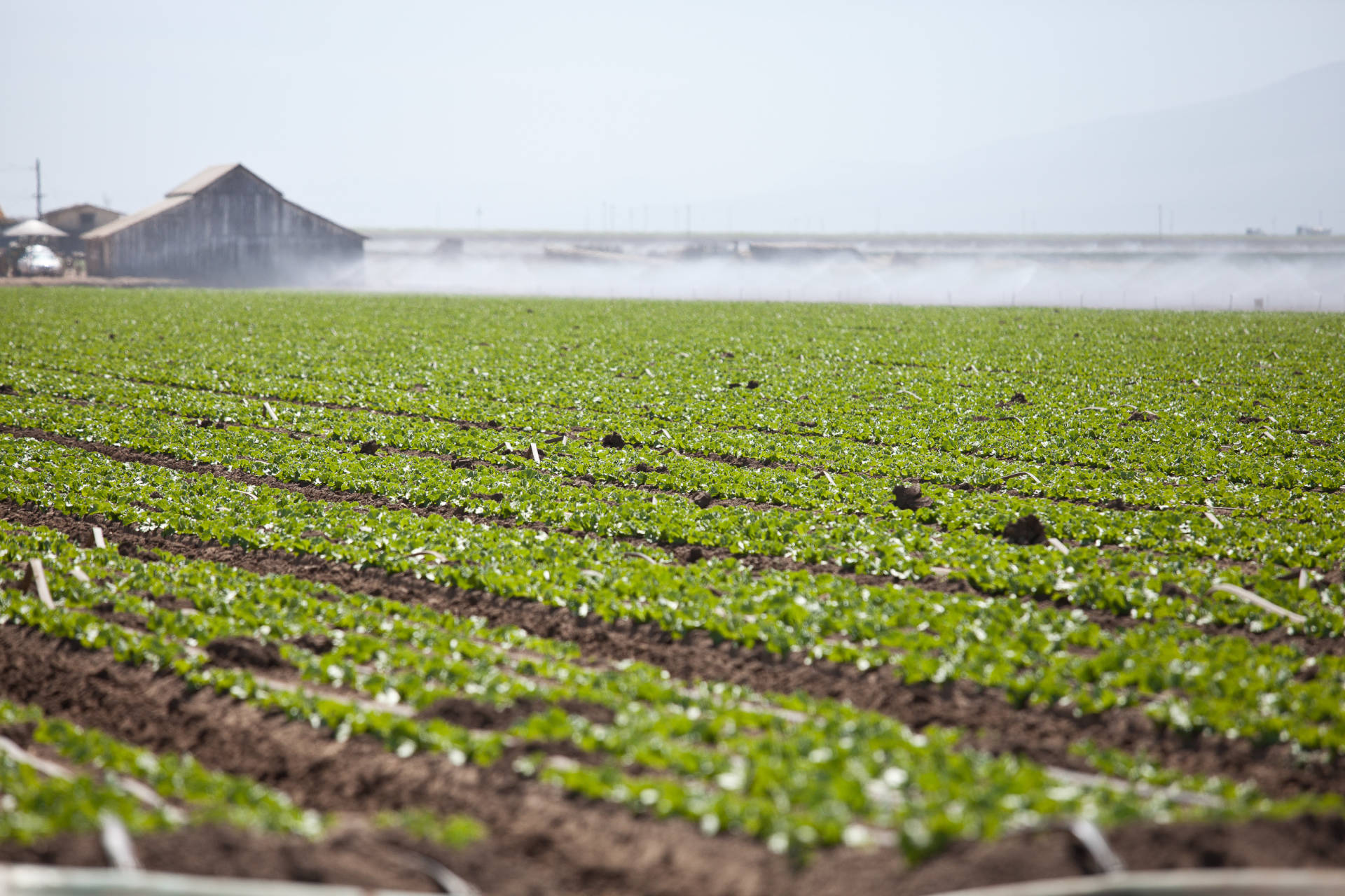Farm fields in Salinas. Deborah Svoboda/KQED