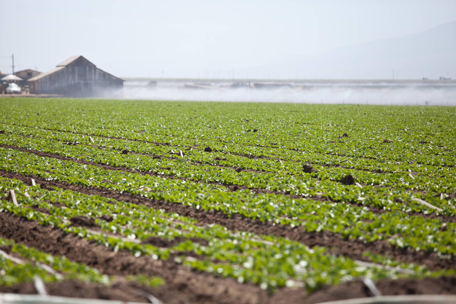 Farm fields in Salinas.