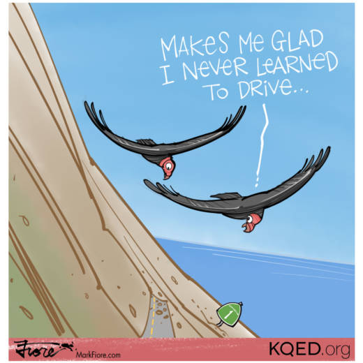 Highway 1 Condors by Mark Fiore