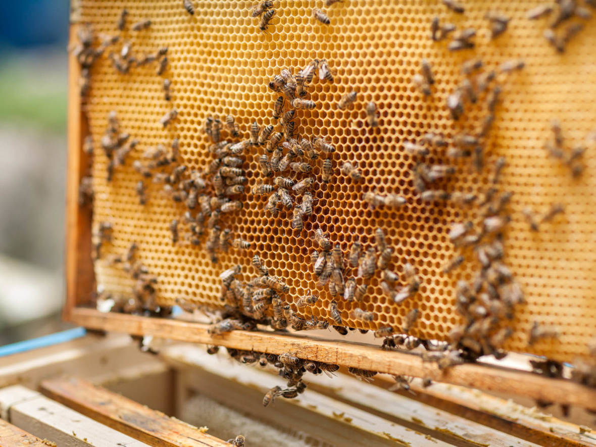 Beehives in an apiary Daniel Milchev/Getty Images