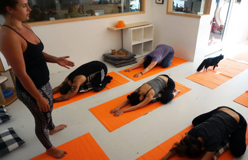 Instructor Lucia Young leads a cat yoga class at KitTea Cafe in San Francisco.