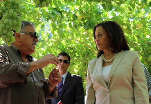 Sen. Kamala Harris tours a grape orchard outside the Fowler Packing Company plant in Fresno, with plant co-owner Dennis Parnagian.