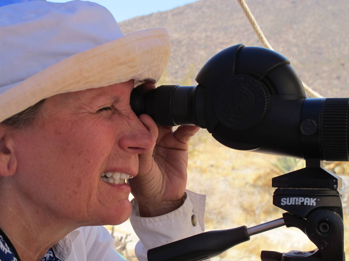 Volunteers Brave Extremes to Count Bighorn Sheep in the Desert