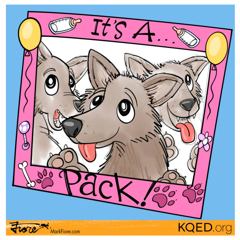 It's a Pack by Mark Fiore