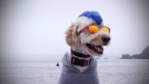 Derby California mellows out before hitting the waves in the World Dog Surfing Championships.