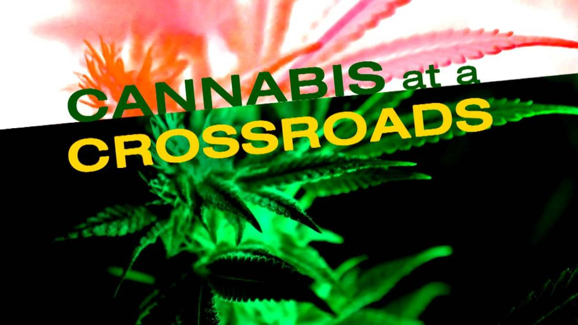 Cannabis at a Crossroads: a KQED Newsroom Special