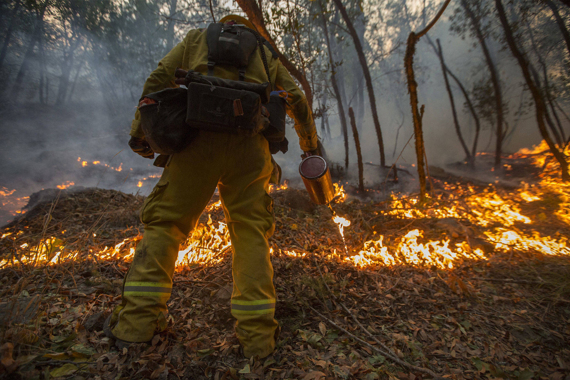 A firefighter uses a drip torch to set a backfire to protect houses in Adobe Canyon during the Nuns Fire on October 15, 2017 near Santa Rosa. David McNew/Getty Images