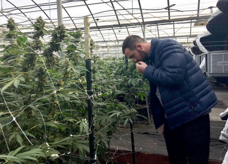 CannaCraft CEO Ned Fussell examines one of the plants in a surviving greenhouse.