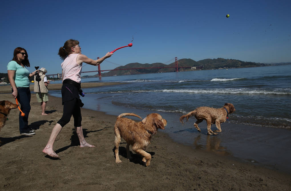 Service Dog Regulations California