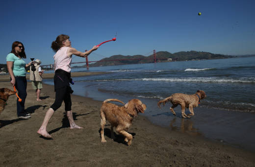 Beachgoers play fetch with dogs at Crissy Field in San Francisco on May 13, 2014.