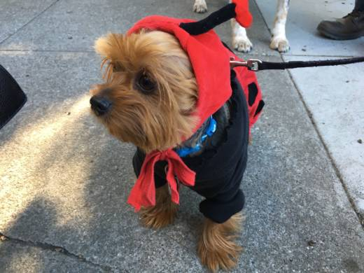 This ladybug puppy received a lot of love during the costume contest. It was followed by a puppy bumblebee.