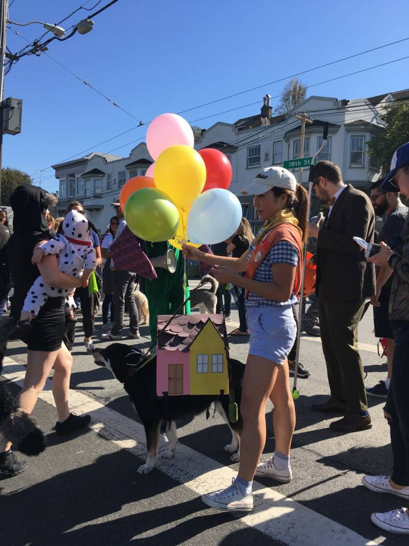 "Janee Chung dressed up her dog Kimmy as the house from the Disney movie ""Up.""  Chung said all the materials for the costume except the balloons were already in her house."