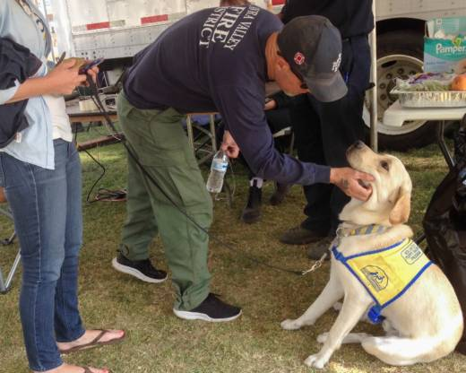 Foley, a Labrador-retriever mix, mingles with firefighters at the Sonoma County Fairgrounds.