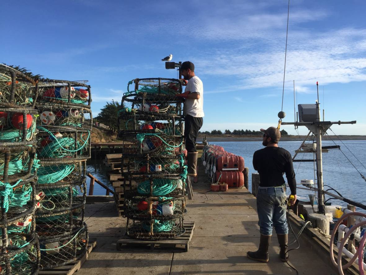Commercial Crab Season Kicks Off