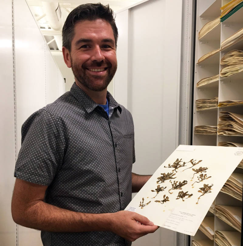 Santa Barbara Botanic Garden Botanist Matt Guilliams shows off specimens in the Herbarium.