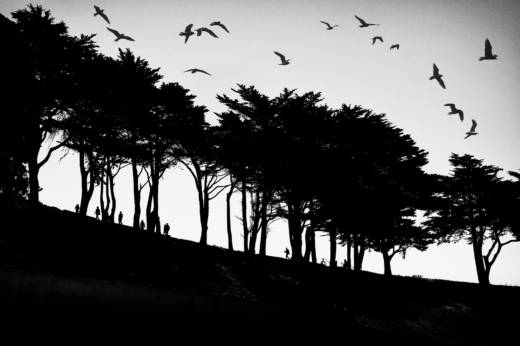 "Photographer Fred Lyon shot ""Treeline at Fort Mason"" in 2017. It is currently on display in an exhibition at the Leica Gallery in San Francisco."