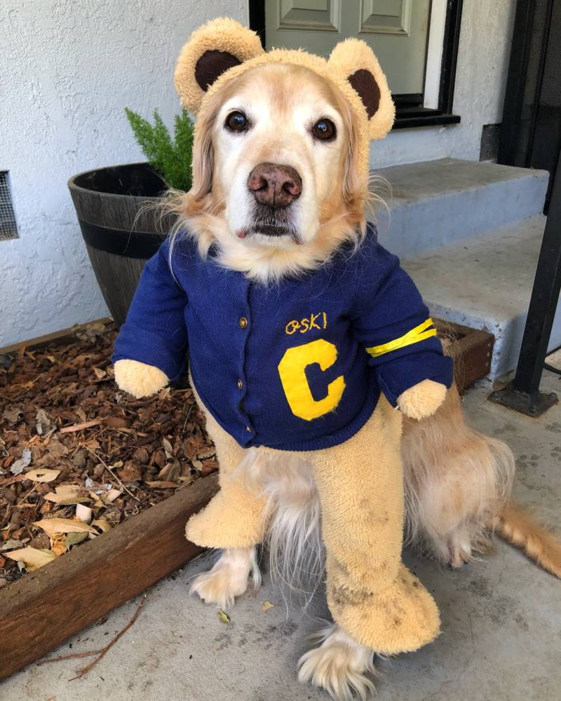 Tam Ma dressed her dog Fred up in honor of the Big Game against Stanford.