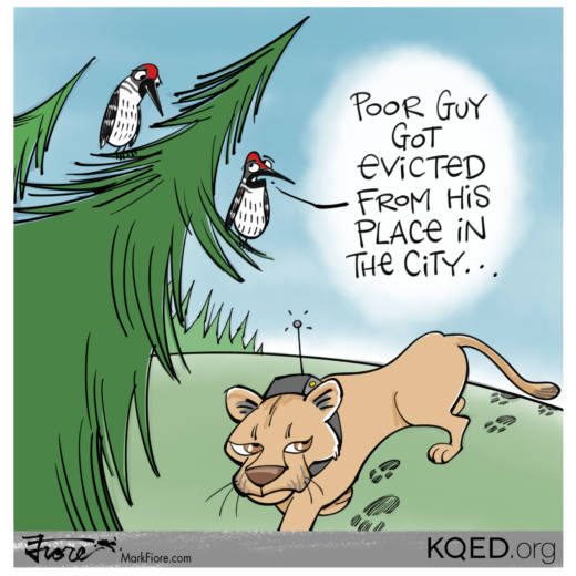 Evicted Lion by Mark Fiore