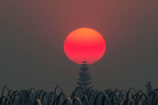The sun, a deep red/orange from the smoke from the Thomas Fire, sets over an agricultural field in Santa Paula on December 12, 2017.