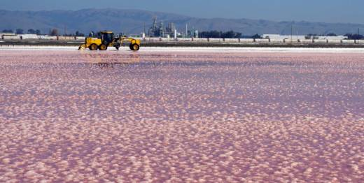 As the water gets saltier, only some microbes are able to thrive, while others die off. Pink water is a good sign that things are working as expected.