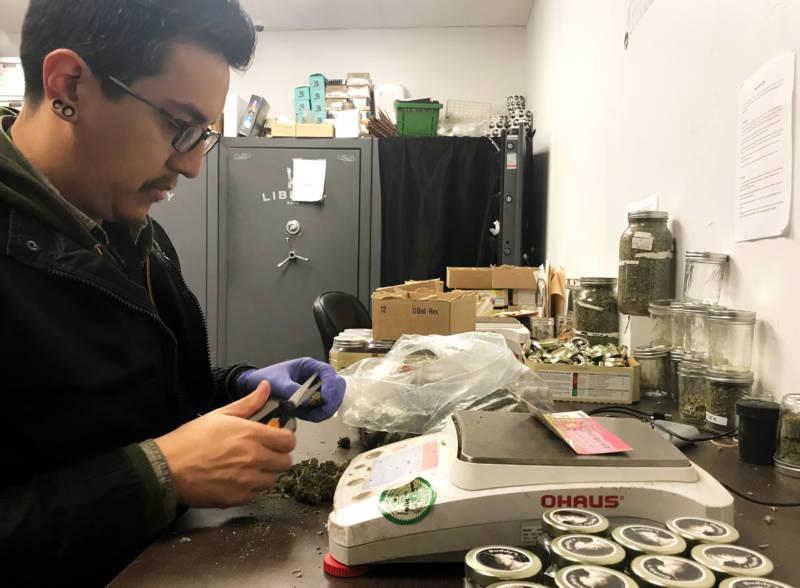 An employee at Buddy's Cannabis in San Jose weighs, sorts and fills containers of cannabis for sale.