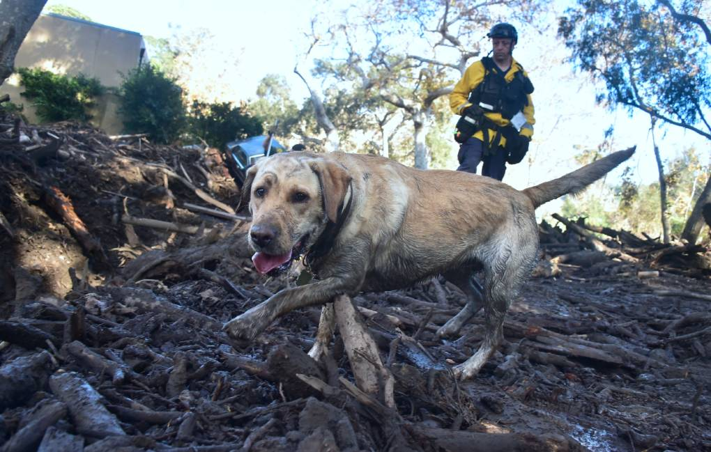 A member of a search and rescue team and his search dog sift through debris looking for victims on a property in Montecito, California on January 12, 2018. Heavy rains on January 9 sent rivers of waist-high mud and debris flowing from the hills into Montecito and other towns in Santa Barbara County northwest of Los Angeles, which are still recovering from last month's ferocious wildfires.