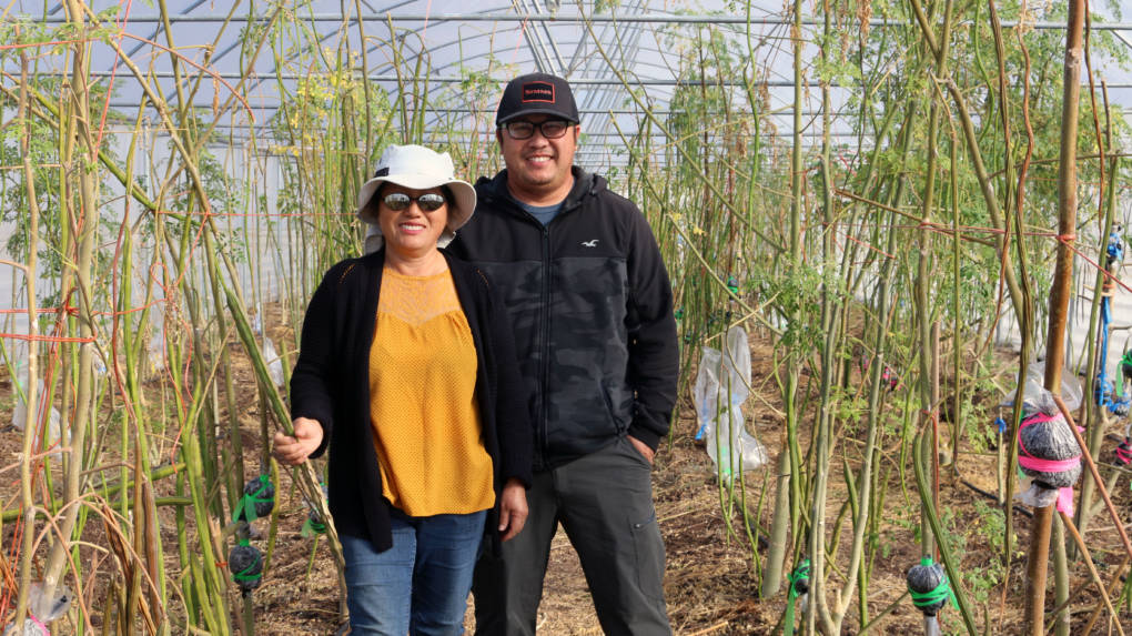 Kaying and Sam Moua stand in their moringa greenhouse, surrounded by mature moringa trees.