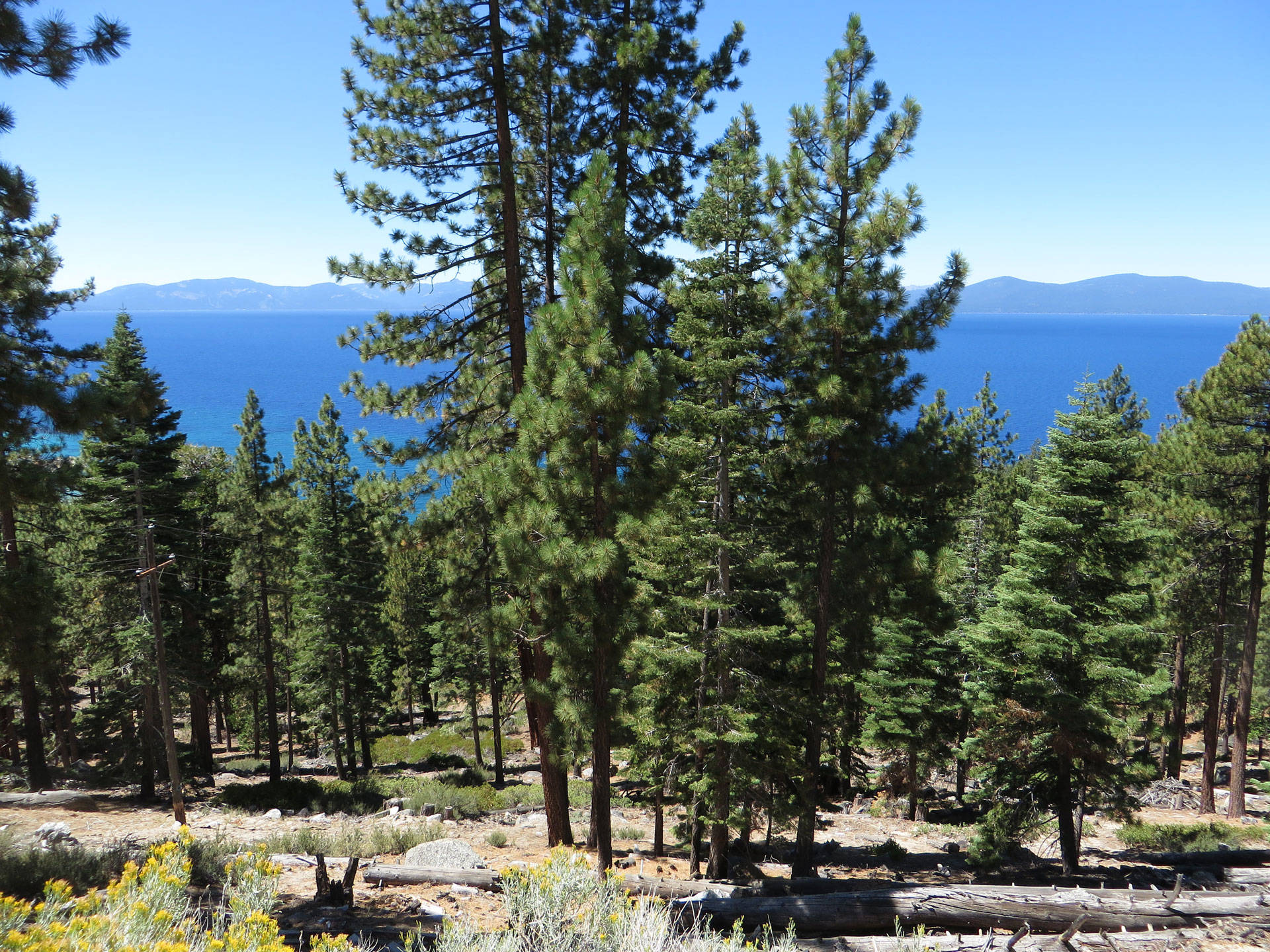 Some cap-and-trade proceeds are going to forest and watershed restoration around Lake Tahoe, which is expected to create multiple benefits: Clearing crowded forests allows more healthy trees to grow, take in and store carbon in the ground and stabilize soils that hold water. Ken Lund/Flickr