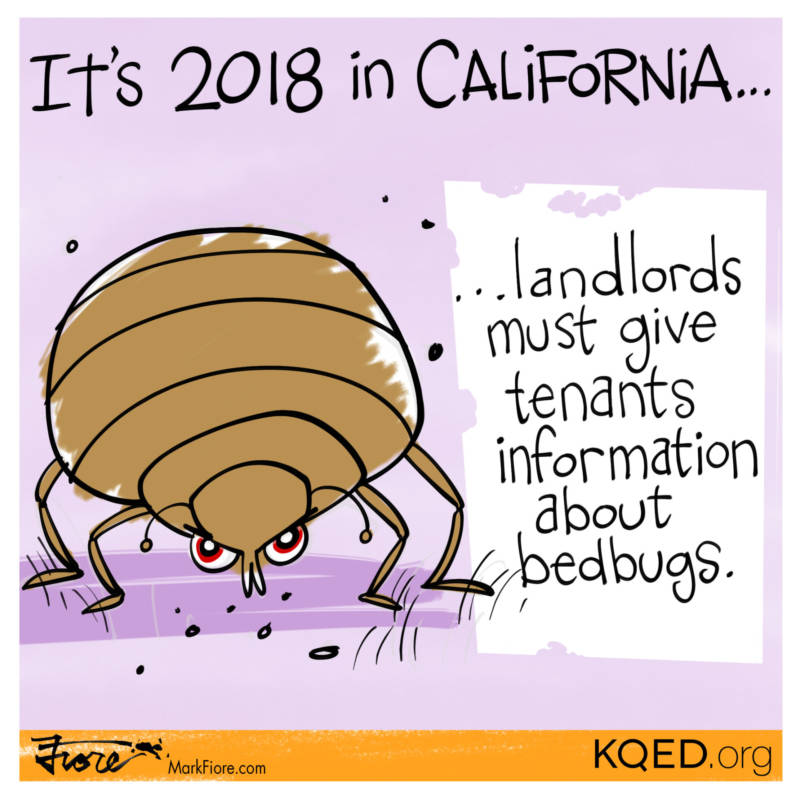 New Laws Bedbugs by Mark Fiore