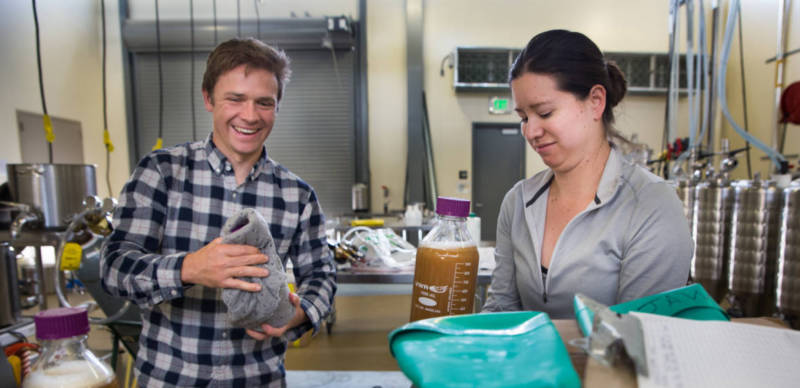 Charles Denby and his colleague, Rachel Lee, prepare to pour their yeast samples into beer fermenters at the brewery at UC Davis.