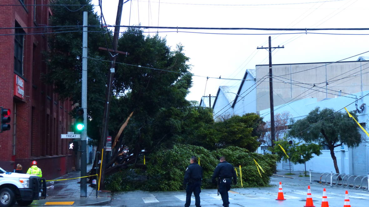 Sidewalk Work May Have Weakened Trees That Toppled and Knocked Out BART Power