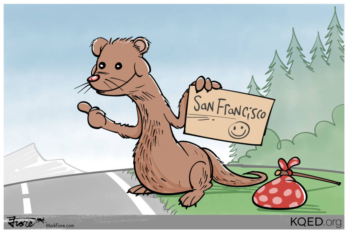 Go West, Young Mink!