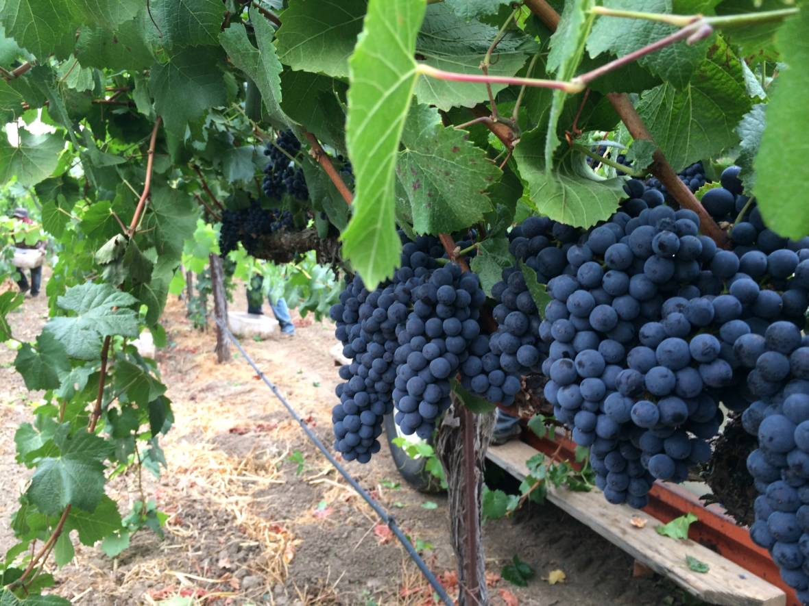 Should California Winemakers Be Worried About China's Tariffs?