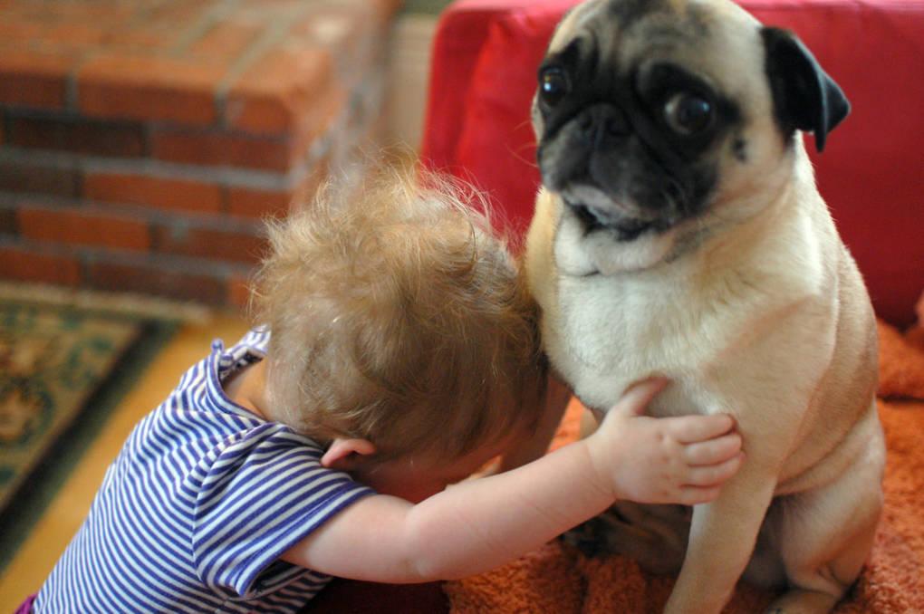 A child hugs a pug.