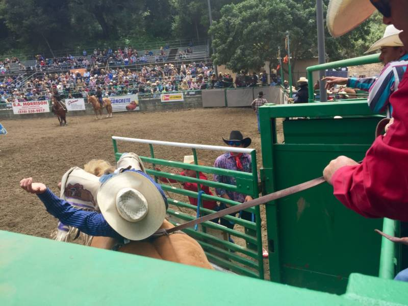 A cowboy starts his time in the bareback riding competition. Other events included steer wrestling, saddle bronc riding and girls barrel race.