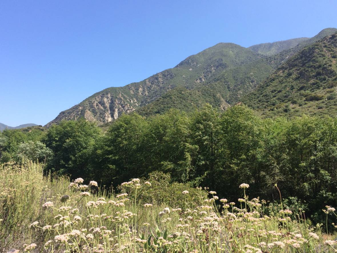 Once Seen as Useless, Ecologists Now Fight to Restore California's Chaparral