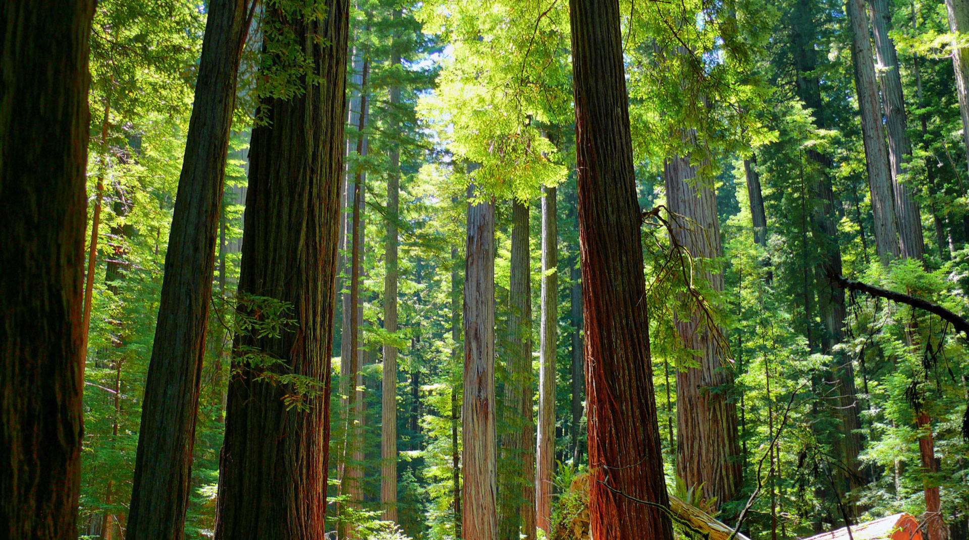 Humboldt Redwoods State Park, in Humboldt County. California's state park system has a backlog of repairs projected to cost more than $1 billion. Rene Rivers/Flickr