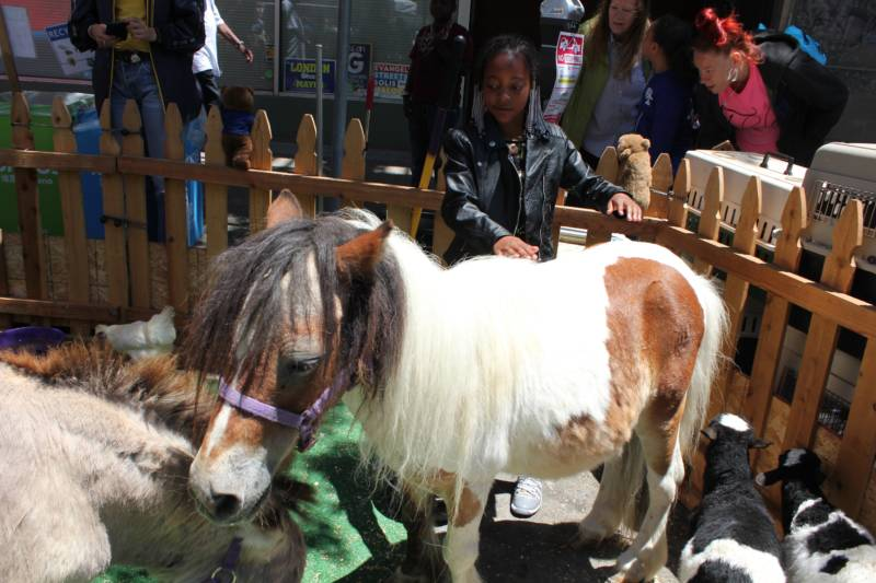 Loriel Price, 8, of San Francisco in the petting zoo at the city's Juneteenth celebration. She says she's always wanted a horse or a rabbit.