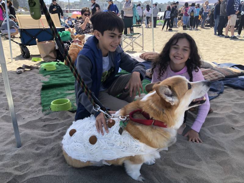 Edwin is sporting a spaghetti and meatballs costume made from yarn, paint and some patience. Brian Sohmers, Edwin's owner, said the family likes to come and look at all the other corgis.