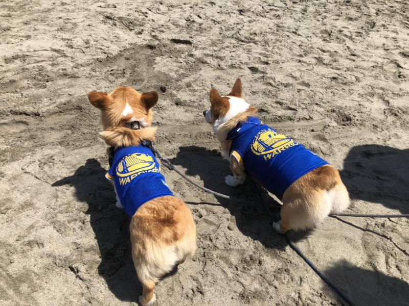 The recent Warriors win was still on the minds of some participants. This is the third Corgi Con for Turbo (right) and his owner, Nina Vo. She started an Instagram account for Turbo to watch his growth.
