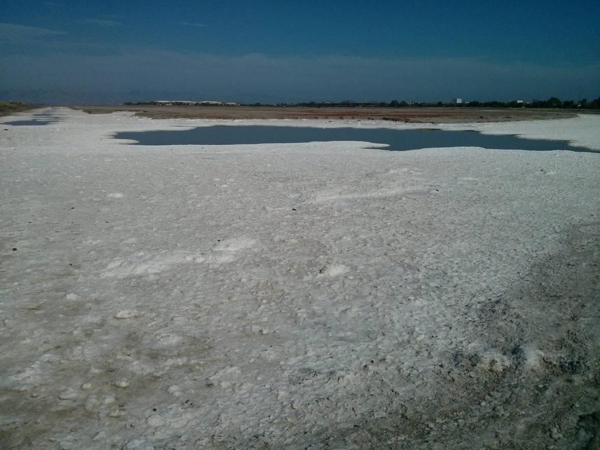 South Bay Salt Ponds: It's Not Pretty, Yet