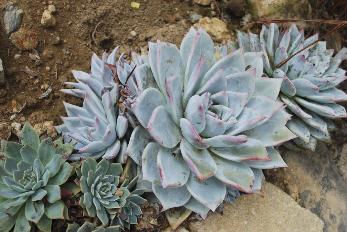 Plant Poachers Sentenced and Fined for Stolen Succulents