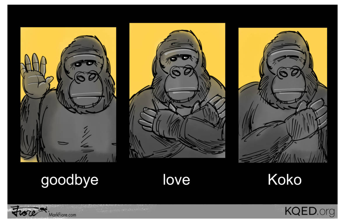 Goodbye Koko