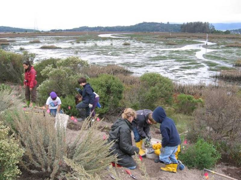 Students and teachers in Point Blue's STRAW program help reintroduce native plants at Sears Point. The program has been restoring wetlands in the Bay Area for over 25 years.