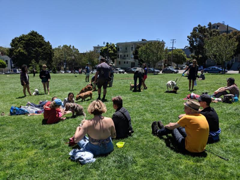 Attendees hung out with their pups at Duboce Park on Sunday, July 8th.