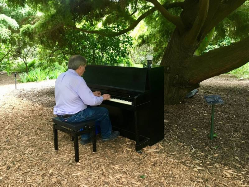 Don Hadley plays one of the pianos underneath a totara tree.