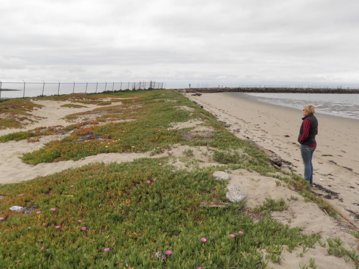 Tiny Alameda Beach to Get Funds to Restore Rare Bay Area Sand Dunes