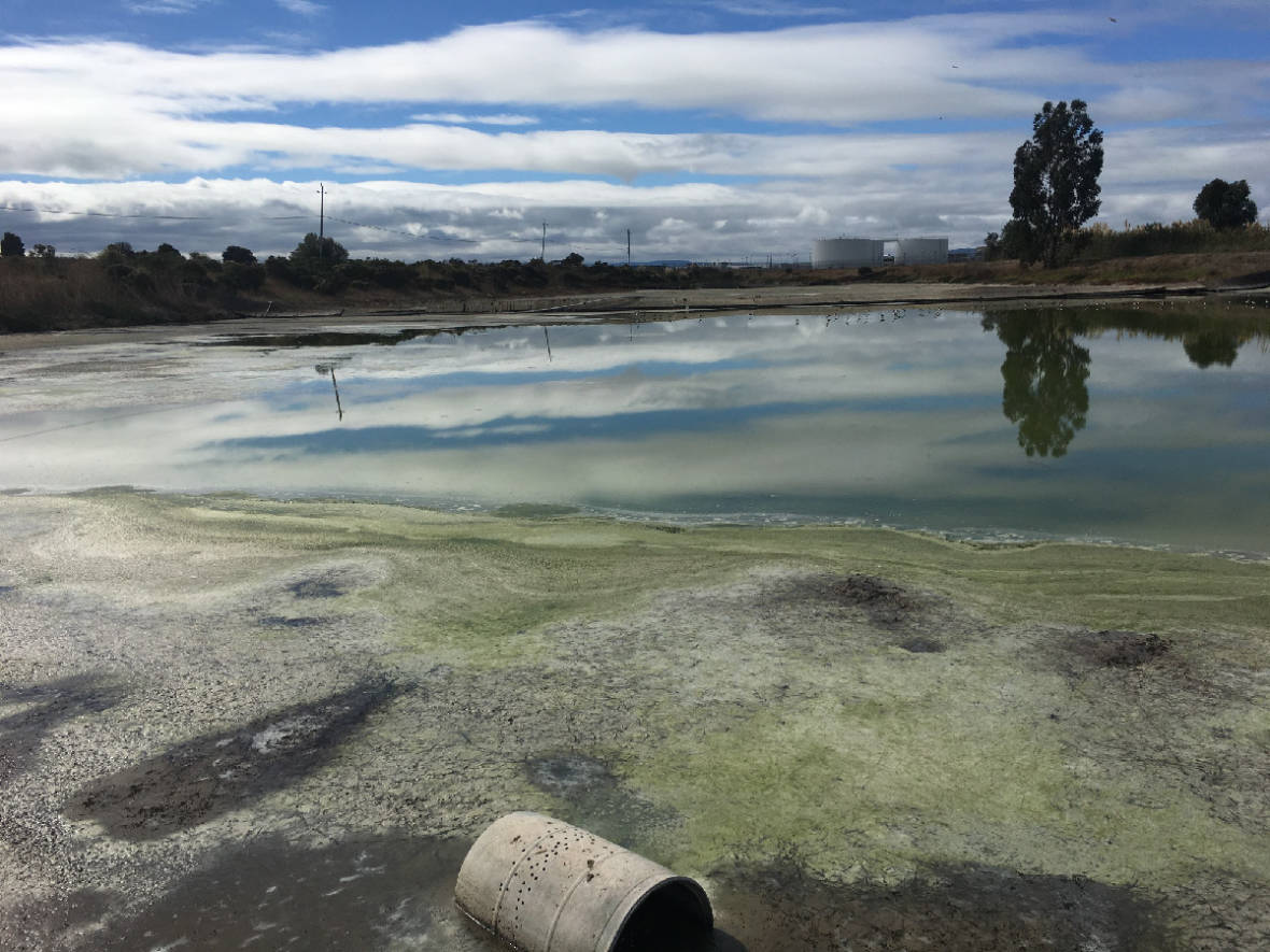 Overlooked Pond Could Become San Leandro's Secret Weapon in Water Pollution Control